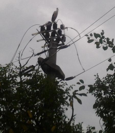 Barza pe un separator 20 kV
