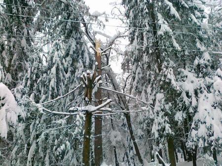 Arbori in culoarele de siguranta LEA 1