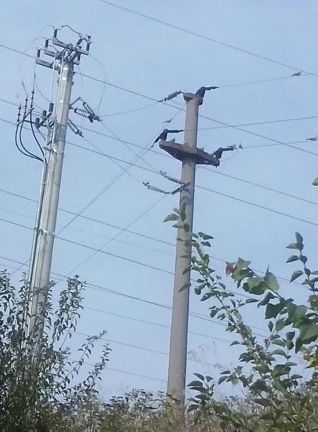 STEPNo + CTE LES 20 kV